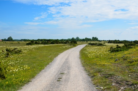 oland: Winding dirt road in a summer landscape at the island Oland in Sweden