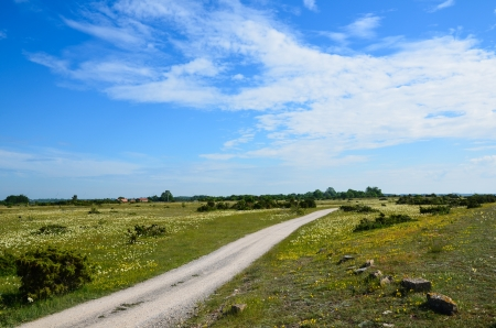 Summer landscape with a dirt road at the island Oland in Sweden Stock Photo - 20926599