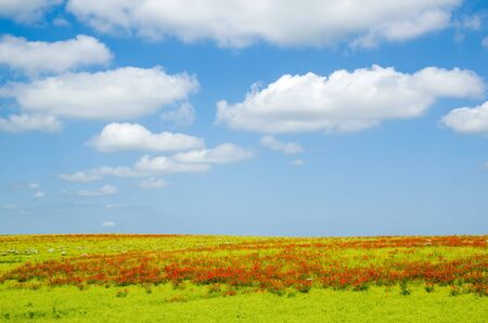 Danish countryside at summer with poppies and white clouds nearby Lejre at Zealand photo