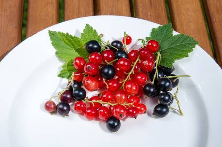 Red and black currants on a plate Stock Photo - 21763727