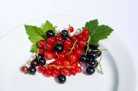 Red and black currants on a white plate Stock Photo - 21763729
