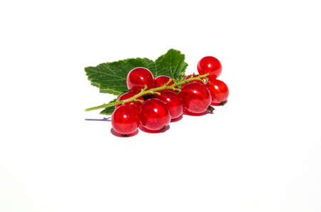 Red currants isolated on white Stock Photo - 21763730