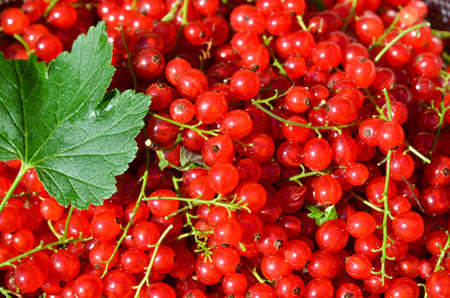 Closeup on redcurrants with green leaf Stock Photo - 21764070