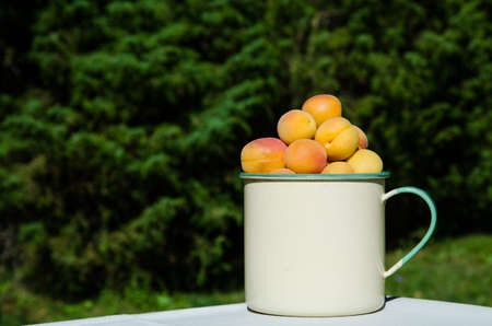 Apricots in a cup on a table at green background Stock Photo - 22172874