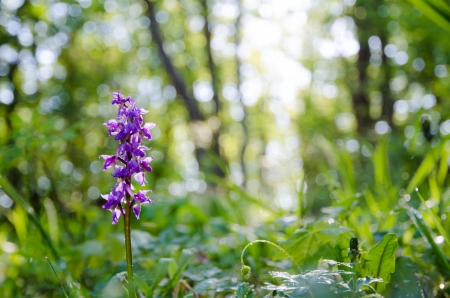 oland: Wild orchid in morning light after rain  From the island Oland in Sweden  Stock Photo