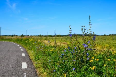 Road side flowers at the island Oland in Sweden Stock Photo