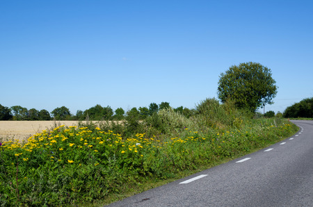 oland: Road side blossom at the island Oland in Sweden