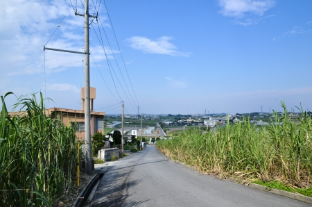 Road surrounded of sugar cane field at the island Okinawa in Japan photo