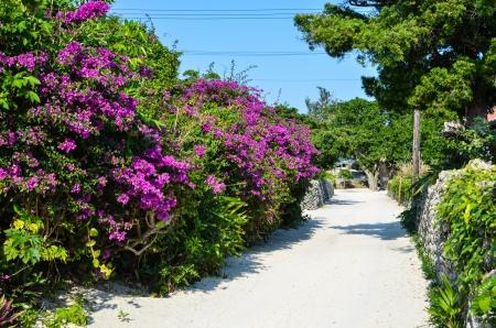 Blumen durch eine Straße auf der tropischen Insel Taketomi in Japan