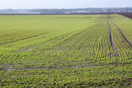 oland: Early springtime field at the island oland in Sweden