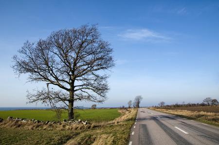 oland: Empty road with a single bare tree at springtime at the swdish island Oland