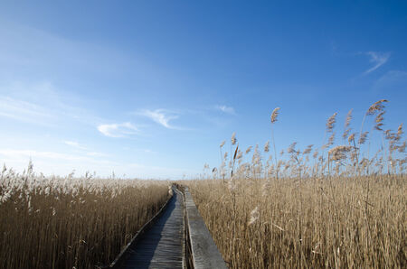 oland: Wooden footpath through the reeds in a wetland at the swedish island Oland