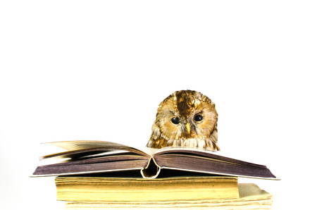 Stuffed owl looking wise at a stack of old books photo