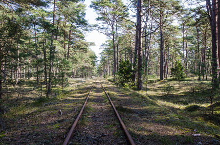 forest railroad: Old railroad tracks in a bright pine tree forest