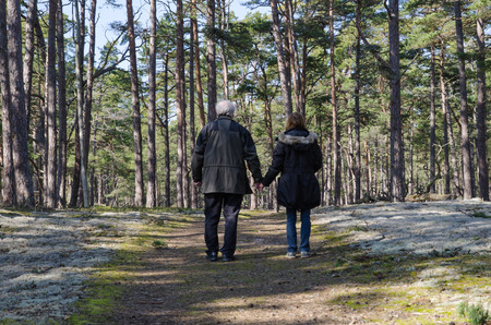Senior couple walks hand in hand in a pine tree forest photo