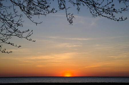 oland: Branches at sunset by the coast of the island Oland in the Baltic sea Stock Photo