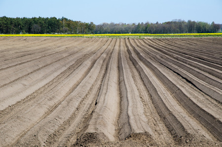 ploughed: Newly ploughed rows in a potatoes field Stock Photo