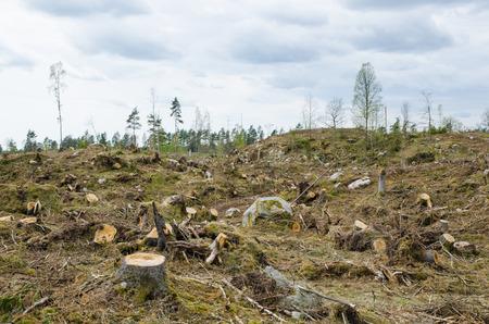 Stompen op een duidelijke cut bosgebied Stockfoto