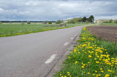 Country road with yellow flowers at roadside Imagens