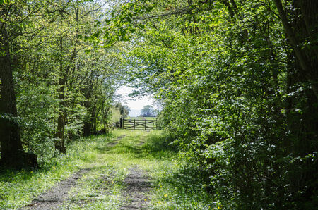 oland: Green tunnel of fresh leaves at a rural road with an old wooden gate  From the swedish island Oland