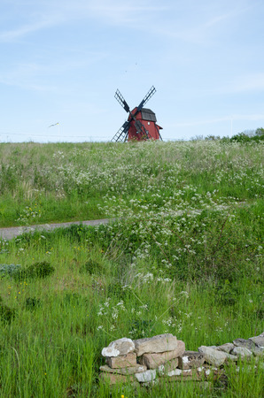 oland: Landscape with cow parsley and an old wooden windmill at the swedish island Oland