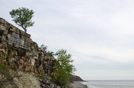 oland: Cliffs and an alone tree by coastline at the swedish island Oland