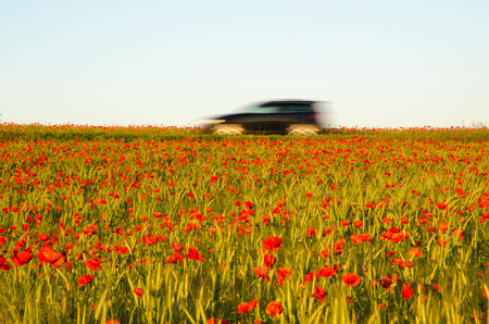 Blurred car driving in a poppy field photo