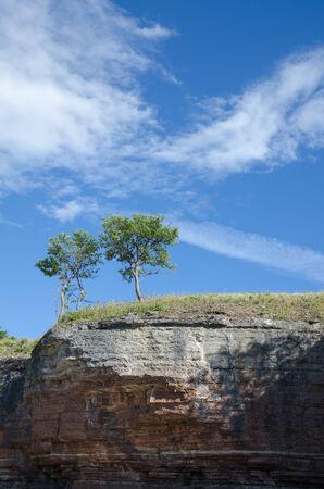 oland: Trees at the edge of limestone cliffs at the swedish island Oland