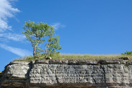 frontline: Tree at the frontline of a limestone cliff at the swedish island Oland Stock Photo