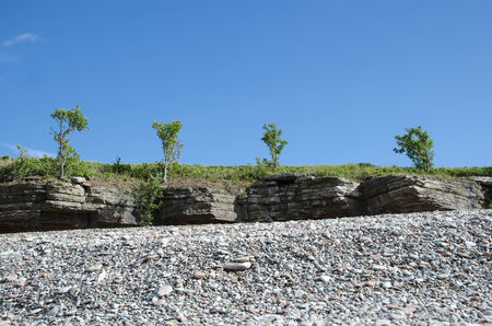 frontline: Trees at the frontline of cliffs by a coast with pebbles at the swedish island Oland