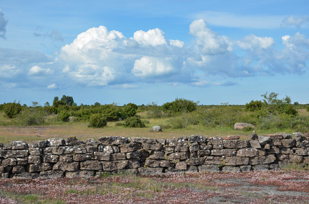 oland: Summer view at a stonewall in a plain landscape at the swedish island Oland
