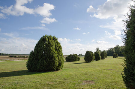 oland: Plain landscape with common junipers at the swedish island oland