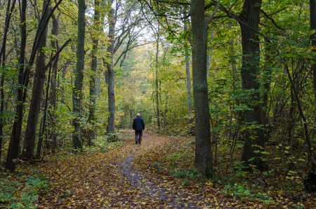 sweden resting: Walking man at a winding footpath in a forest with autumn colors Stock Photo