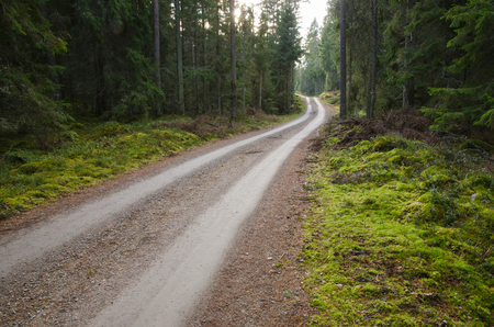 A green and mossy coniferous forest with a winding dirt road photo