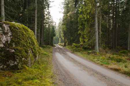 dirtroad: A big and mossy rock at roadside by a dirtroad in a green shiny coniferous forest
