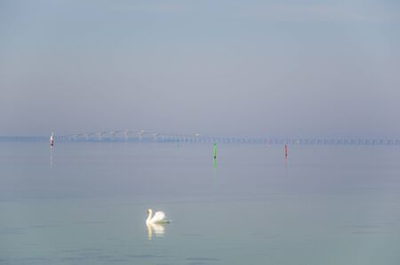 oland: A single mute swan is swimming by the coast of the swedish island Oland with the Oland bridge in the background.