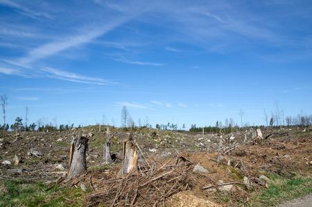 Stompen op een duidelijke grens bosgebied in Zweden Stockfoto