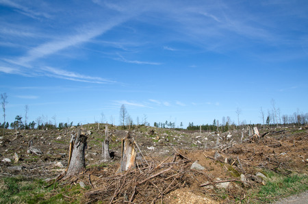 tree felling: Stumps at a clear cut forest area in Sweden