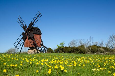 oland: Blossom dandelions by a traditional windmill at the swedish island Oland in the Baltic Sea Stock Photo