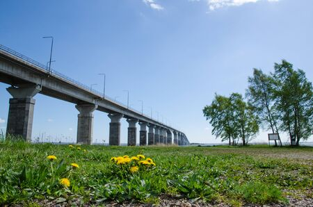 low angle views: Spring  with dandelions at this low angle image of the Oland Bridge connecting the swedish island Oland with mainland Sweden