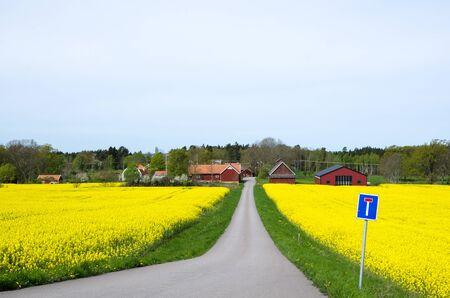 oland: Spring landscape with blossom canola field at the swedish island oland Stock Photo