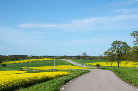 oland: Landscape with a mosaic in green and yellow at the swedish island Oland Stock Photo