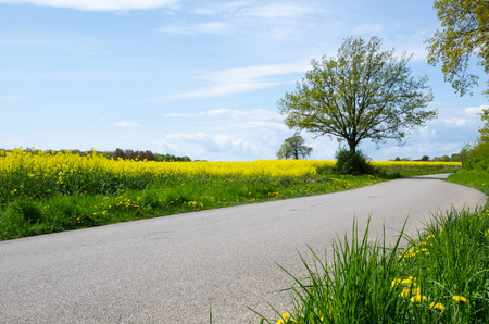 Green and yellow blossom at roadside by a countryside road at spring