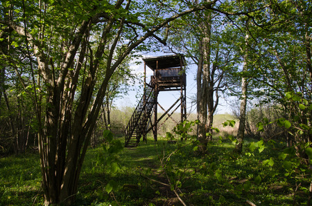 bird watching: Hidden bird watching tower in a deciduous forest in a swedish nature reserve