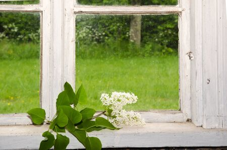 lilacs: Decoration indoors with white lilacs at an old window with a green garden outside Stock Photo