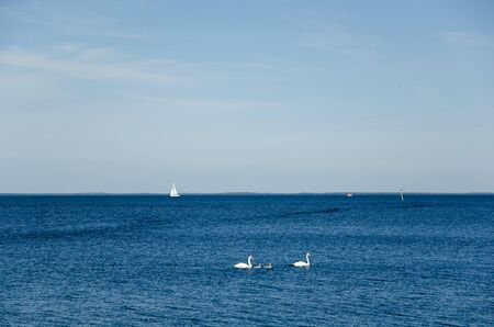 swimming swan: Swimming swan family in clear blue water with boats at the horizon