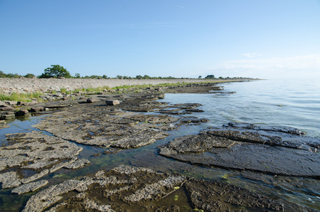 oland: Flat rock limestone coast at the swedish island Oland in the Baltic Sea
