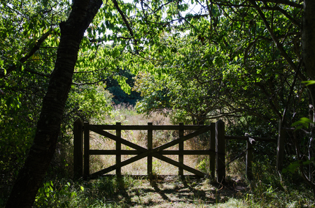 glade: Backlit old wooden gate in a forest glade Stock Photo