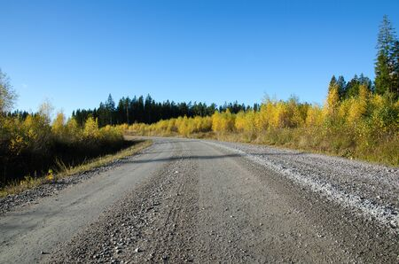 low perspective: Low perspective image of a colorful gravel road at fall