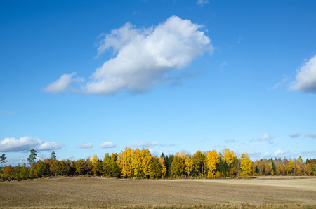 swedish: Colorful swedish landscape in sunshine at fall